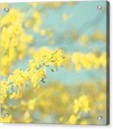 Sunny Blooms 2 Acrylic Print