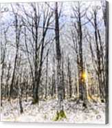 Sunrise Snow Forest Art Acrylic Print