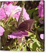 Swallowtail Acrylic Print