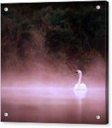 Swan In The Mist Acrylic Print