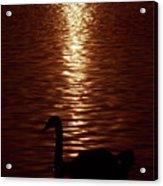 Swan Silhouette Acrylic Print