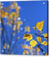 Sweet Autumn Acrylic Print
