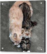 Sweet Couple Acrylic Print