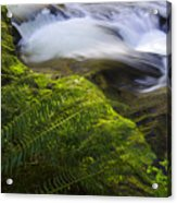 Sweet Creek Oregon 11 Acrylic Print