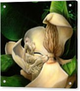 Sweet Smell Of Magnolia's Acrylic Print