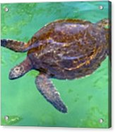Swimming Along Acrylic Print