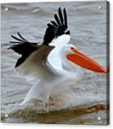 Take Off Acrylic Print by Janet Moss