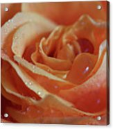 Tangy Acrylic Print by Tracy Hall