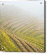 Terrace Fields Scenery In Autumn Acrylic Print