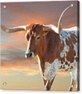 Texas Icon Acrylic Print