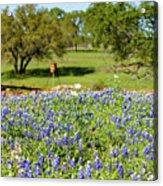 Texas Wildflowers Acrylic Print