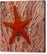 Thailand, Marine Life Acrylic Print