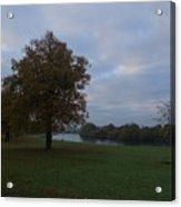 That Tree, 26th October, 2015 Acrylic Print