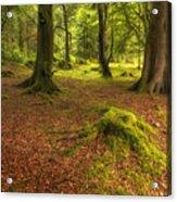 The Ardgartan Forest Acrylic Print