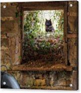 The Barn Cat Acrylic Print