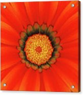 The Beauty Of Orange Acrylic Print