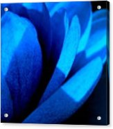 The Blue Lilly Acrylic Print by Catherine Natalia  Roche