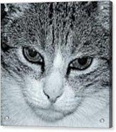 The Cat's Innocense Acrylic Print