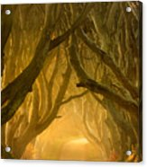 The Dark Hedges IIi Acrylic Print by Pawel Klarecki