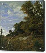 The Edge Of The Woods At Monts-girard, Fontainebleau Forest Acrylic Print