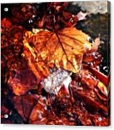 The End Of Fall Acrylic Print
