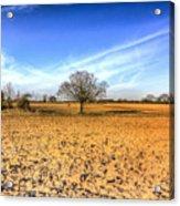 The Farm Tree Acrylic Print