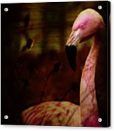 The Flamingo Acrylic Print