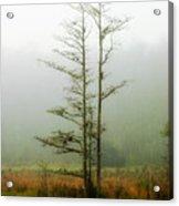 The Foggy Dew Acrylic Print