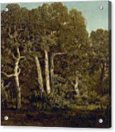 The Great Oaks Of Old Bas-breau Acrylic Print