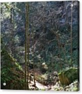 The Green Forest Acrylic Print