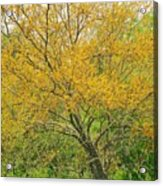 The Leaning Tree Acrylic Print