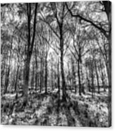 The Monochrome Forest Acrylic Print