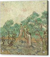 The Olive Orchard, 1889 Acrylic Print