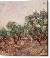 The Olive Pickers Acrylic Print