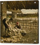 The Sheepshearing Acrylic Print