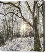 The Snow Forest Art Acrylic Print