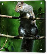 The Squirrel From Fairyland Acrylic Print