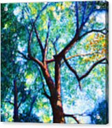 The Tree Acrylic Print