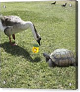 The Turtle And The Goose Acrylic Print