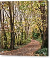 The Woods In Autumn Acrylic Print