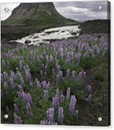 Thofafoss Waterfall Iceland 1571 Acrylic Print