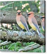 Three In A Row Acrylic Print