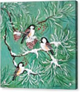Three Little Chickadees In Pine Acrylic Print