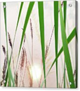 Through The Looking Grass Acrylic Print