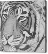 Tigar Acrylic Print