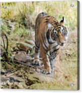 Tiger In The Woods Acrylic Print