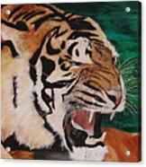 Tiger Paw Acrylic Print by Shahid Muqaddim