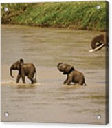 Tiny Elephants Acrylic Print