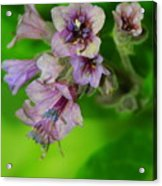 Tiny Purple Flower Acrylic Print