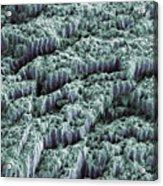 Tooth Enamel, Sem Acrylic Print by Steve Gschmeissner
